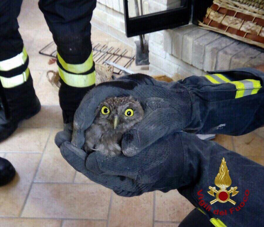 Fermo, gufetto imprigionato nella canna fumaria torna in libertà