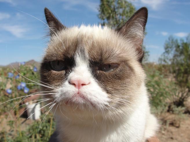 """Addio a Grumpy Cat, il gatto """"arrabbiato"""" più famoso del web lascia un patrimonio da 100 milioni di dollari"""