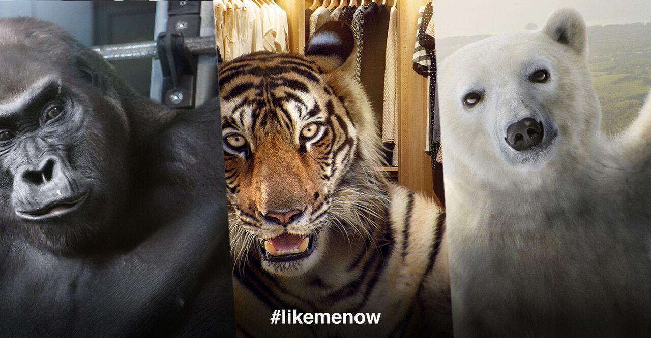 #LikeMeNow: gli animali diventano influencer su Instagram per salvarsi dall estinzione