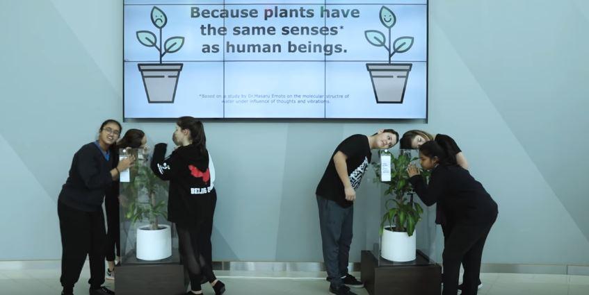 Bully a plant : l esperimento per educare i ragazzi contro la violenza verbale o fisica
