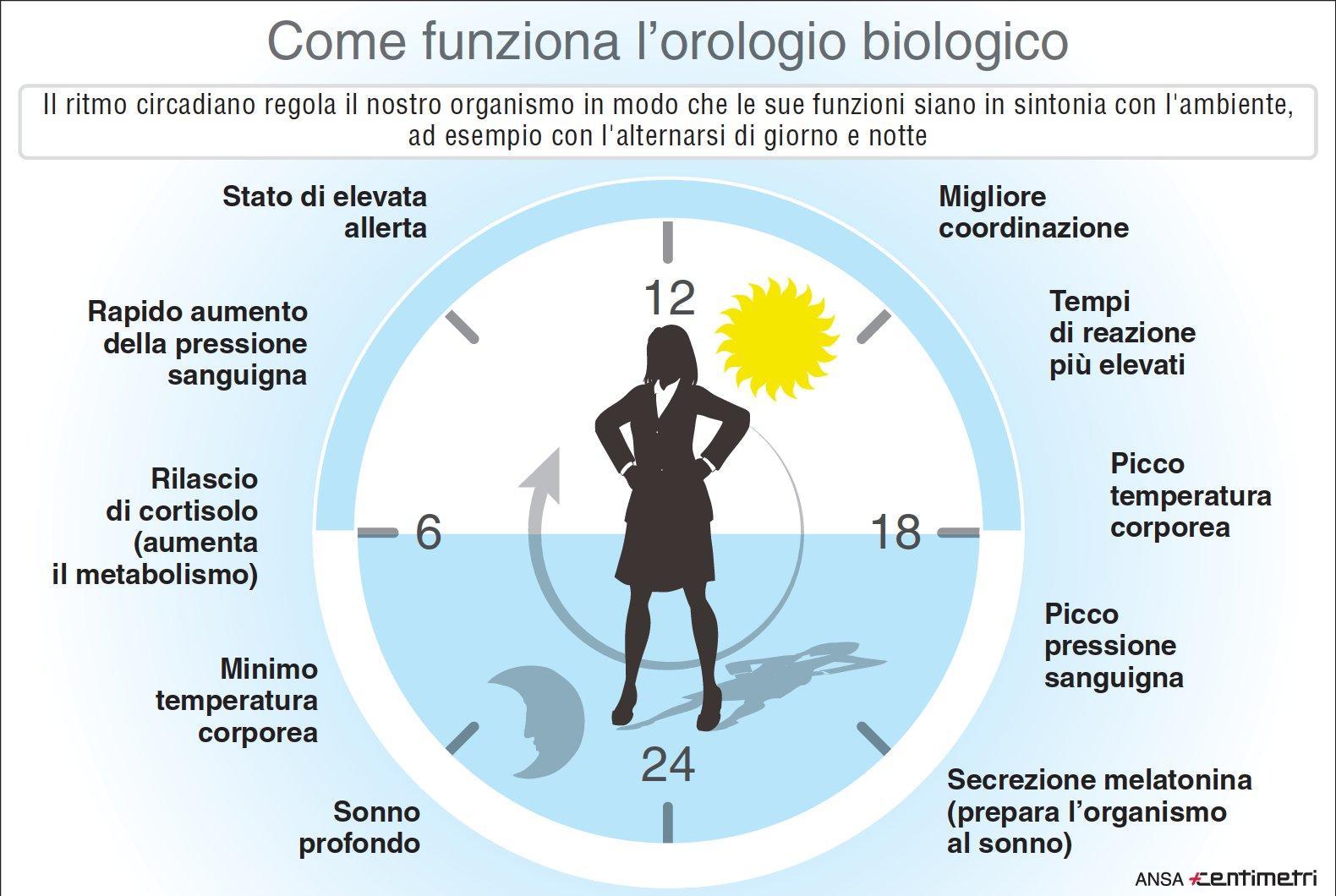 Ecco cos è l orologio biologico da Nobel