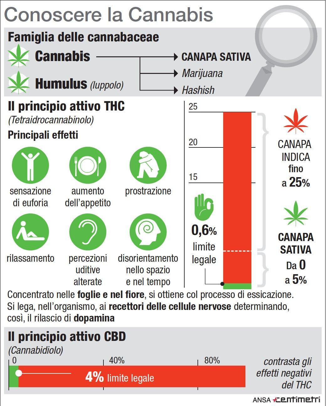 La cannabis light, proprietà e soglia di tolleranza in Italia
