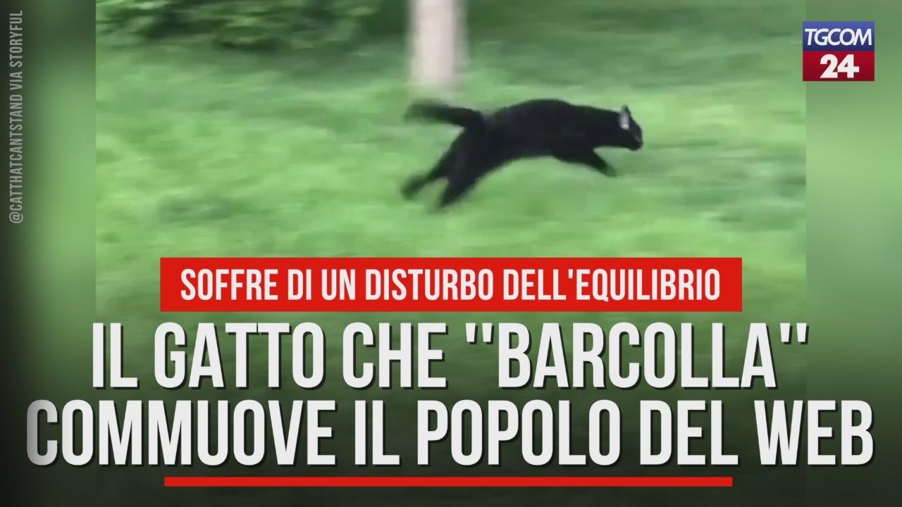 Il Gatto Che Barcolla Commuove Il Popolo Del Web Video Tgcom24