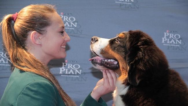 I cani capiscono le nostre frasi e il tono con il quale le pronunciamo